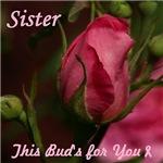 Rose Bud for my Sister