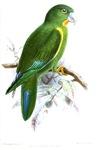 Green Parrot Illustration