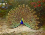 .Vintage Art of a Peacock