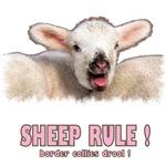 Sheep Rule