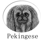 Pekingese Ink Drawing