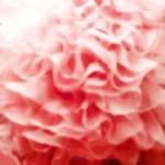 Pink Ruffle Paris Fashion