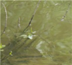 River Branches