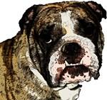 Gunnis The Dog