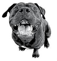Smiling Staffie