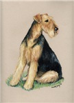 airedale colored pencil