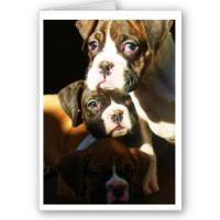 Boxer Greeting Cards and Postcards
