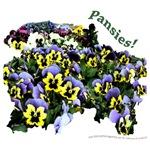 3020B Purple Yellow Pansies