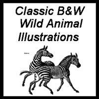 Classic Wild Animal Illustrations (B&W)