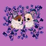 Chihuahua pair