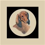 Longhaired Dachshund head study