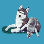 All My Siberian Husky Artwork - Wolves