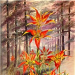 Southern Red Lilies in a Forest