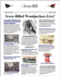 Womens Ivory-bills Live! Apparel