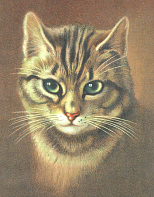 Gorgeous brown tabby cat from Full Moon Emporium at CafePress.