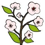 cherry blossoms (pink) valentine