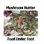 Mushroom Hunter (Morel)