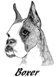 Boxer - 3 images