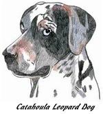 Catahoula Leopard Dog - 2 images * color images*