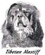 Tibetan Mastiff - 13 images