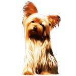 Yorkshire Puppy Tiny Dog