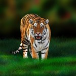 Tiger on Green