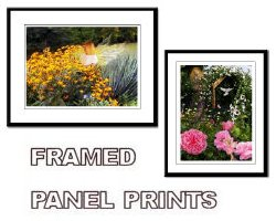 Framed Angel Prints