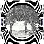 Zebra in print