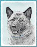 Norwegian Elkhound-Multiple Illustrations