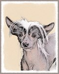 Chinese Crested-Multiple Illustrations