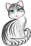 cute gray tiger kitty