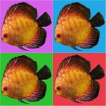 Pop Art Fish T-shirts & Gifts