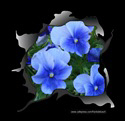 VIOLET PANSIES T-SHIRTS AND GIFTS