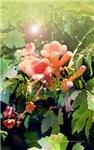 Trumpet Flower Glow