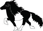 Pinto Icelandic horses