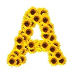 Sunflowers Letter A