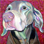 Weimaraner - Just a Sniff