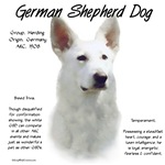 German Shepherd Dog (white)