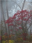 .foggy sumac. I