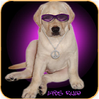 Labs Rule Dog Gift