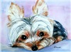 Yorkshire Terrier Gifts