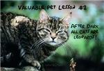 Valuable Pet Lesson #2