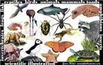 Scientific Illustration Postcards