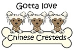 Three Chinese Crested Dogs (Brown Chinese Crested)
