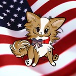 Patriotic Long Coat Chihuahua