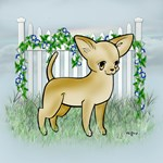 Garden Fence Chihuahua- Tumbles