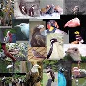 Bird Photo Gifts