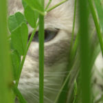 Cat in Grass