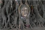 Trees Hugging Buddha's Head