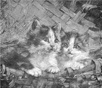 Anxious Kittens